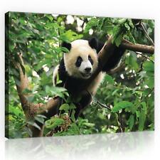 Wandbild  Leinwandbild Kunstdruck 10238_PP-1 Canvas Picture Print Panda-Bär auf