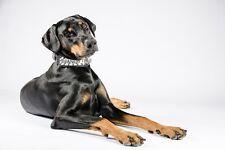 Personnalisé col en cuir pour gros chiens. m à xxl. doberman, rottweiler, dogo