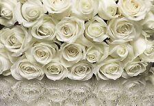 MURALE PARETE BIANCO ROSE Foto Carta da parati fiori 368x254cm wallvovering KOMAR