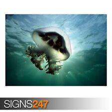 Malva Stinger medusas (3709) Cartel impresión arte A1 A2 A3 - 2º Cartel 50% Off!