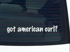 got american curl? CAT BREED FUNNY DECAL STICKER ART WALL CAR CUTE