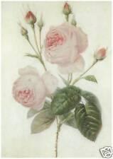 C Delarne - Roses, 1829 - MEDICI POSTCARDS