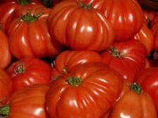 Fleischtomaten aromatische Riesentomaten in vielen Farben Samen zum Aussuchen