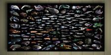 """STAR TREK SPACESHIPS CANVAS POSTER SZ 10x20"""" 20x30"""" 30x40"""" SPACECRAFTS SHIP"""