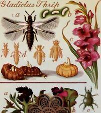Vtg 1973 Art Print Bookplate Etymology Bug Illustration * See Variety
