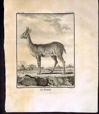 Reedbuck - Nagor 1772 Buffon Copper Plate Engraving