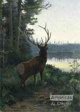 Wapiti Elk by Oliver Kemp (:Art Print of Vintage Art:)