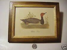 folkart redheaded duck print antiqued frame 8x10 NICE!