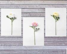 Single Stem Artificial Ranunculus Flower Pick x 26cm - White Pink or Cream