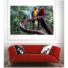 Affiche poster perroquet forêt 35093101 Art déco Stickers