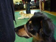 Col Tête GenCon simple anti Pull doux s' arrête tirer chien toutes tailles tous coloris