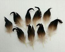 Erpellocken,echte außergewöhnliche Entenfedern/Stockente!Sammeln!Naturdeko.RAR