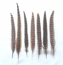 NEU!Weibliche Schwanzfedern Fasan,natur, 22-27 cm,,Karneval,Fasanenfedern.RAR!