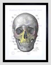 PITTURA disegno diagramma dell' uomo TESCHIO OSSA ANATOMIA FRAMED ART PRINT b12x13574