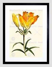 PITTURA botanica FIORE GIGLIO PETALO ARANCIO GIALLO FRAMED ART PRINT b12x7236