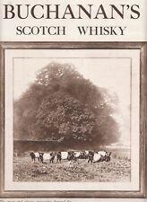 """Publicité Ancienne """"Black & White Scotch Whisky 1922  """""""