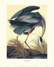 Great Blue Heron by John James Audubon Canvas Giclee