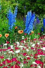 Blue Delphiniums Summer Flowers Photograph Print