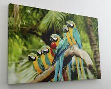 Papagei Vogel Tier Leinwand Bild Wandbild Kunstdruck L0101