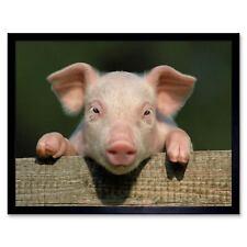 Photo Animal Pig Piglet Cute Farm Pink Baby Babe 12X16 Inch Framed Art Print