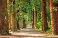 Tapete Vlies Fototapete Natur grüne Landschaft Park Baumallee Weg durch den Wald