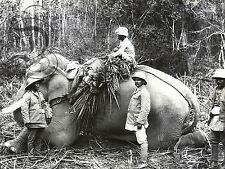 PLAQUE ALU REPRODUISANT UNE PHOTO CHASSE AUX TIGRES INDE ELEPHANT 1900