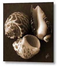 Seashells Large Black and White Sepia Fine Art Print on Metal or Acrylic No 1