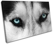 Wolf Eyes Wild Animals SINGLE TOILE murale ART Photo Print
