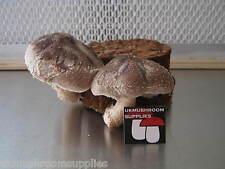 Shiitake, lion's mane, enokitake ou reishi mushroom grow kit-wood based pf tek