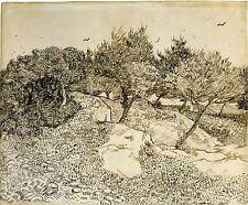 Van Gogh Drawings: Olive Trees - Fine Art Print