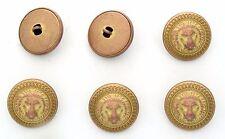 6 bottoni in metallo scatolati - LEONE - lion buttons