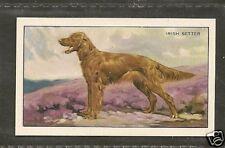 Rare 1936 UK Dog Art Full Body Gallaher Series A Cigarette Card Red IRISH SETTER