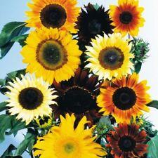 Sunflower Seeds Mix 300 Or 1,000 Seeds