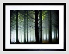 PHOTO LANDSCAPE FOREST PINE TREE SUNSHINE WOOD FRAMED ART PRINT MOUNT B12X13165