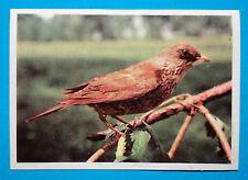 Figurina Panini-ANIMALI DI TUTTO IL MONDO 1965-n.213-CARDELLINO-rec
