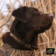 NEW AVERY SPORTING DOG GREENHEAD GEAR GHG STANDARD HUNTING DOG COLLAR