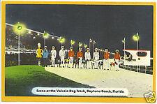 Greyhound Dog Race - Volusia Track Daytona Beach FL