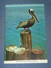 Vintage Picturesque Pelican Florida Postcard