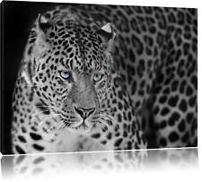 Prächtiger Leopard Schwarz/Weiß Leinwandbild Wanddeko Kunstdruck