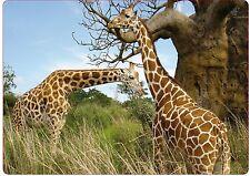 Sticker pc ordinateur portable Netbook autocollant Laptop Girafes réf 272