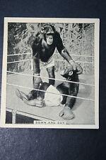 BOXING CHIMPANZEES    Vintage Photo Card    VGC