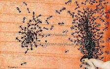 "SALVADOR DALI Painting Poster or Canvas Print ""THE ANTS (LAS HORMIGAS)"""