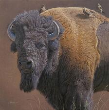 """Cowbird Companions"" Daniel Smith Western Fine Art American Bison Giclee Canvas"