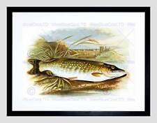 La pittura di animali Pesce LUCCIO Lydon Nero Framed Art Print b12x12827