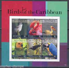 ST VINCENT MUSTIQUE BIRDS OF THE CARIBBEAN SHEETLET