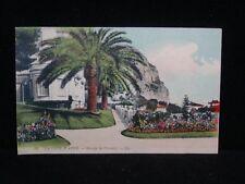 Antique POSTCARD c1910-15 era La Cote D'Azur - Groupe de Palmiers UNUSED (X129)