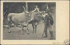 portugal, Uma Junta de Bois do Norte, Cows (ca. 1899)