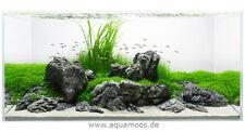 In-vitro plantas grow! para la selección, los caracoles -/algas libre y top-calidad