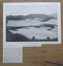 Article,photo,nouveau mode de culture du tabac Porto Rico , 1907,