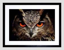 NATURA Bird GUFO chiudere occhio becco Preda Aquila Nero Framed Art Print b12x4025
